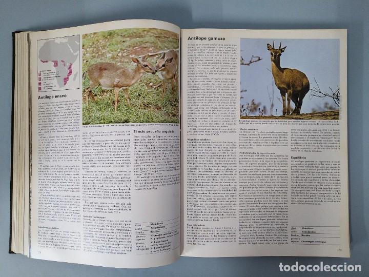 Enciclopedias de segunda mano: ENCICLOPEDIA DE LA VIDA ANIMAL - COMPLETA (6 VOLUMENES) - EDITORIAL BRUGUERA - AÑO 1976 ... L1724 - Foto 5 - 213228926