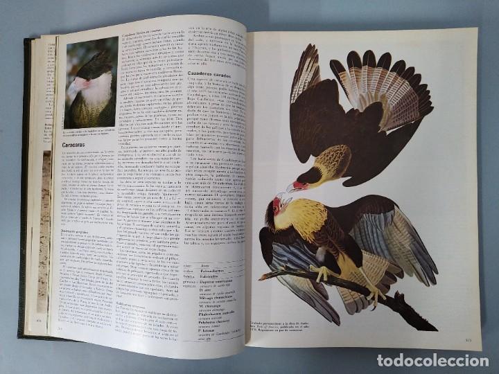 Enciclopedias de segunda mano: ENCICLOPEDIA DE LA VIDA ANIMAL - COMPLETA (6 VOLUMENES) - EDITORIAL BRUGUERA - AÑO 1976 ... L1724 - Foto 9 - 213228926