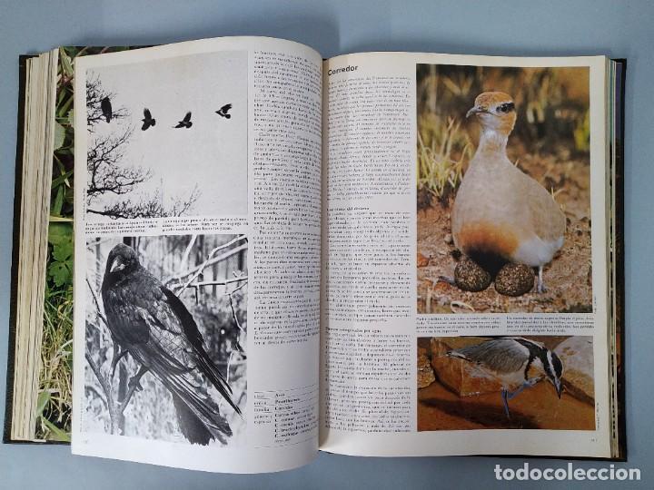 Enciclopedias de segunda mano: ENCICLOPEDIA DE LA VIDA ANIMAL - COMPLETA (6 VOLUMENES) - EDITORIAL BRUGUERA - AÑO 1976 ... L1724 - Foto 10 - 213228926