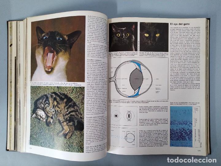 Enciclopedias de segunda mano: ENCICLOPEDIA DE LA VIDA ANIMAL - COMPLETA (6 VOLUMENES) - EDITORIAL BRUGUERA - AÑO 1976 ... L1724 - Foto 14 - 213228926
