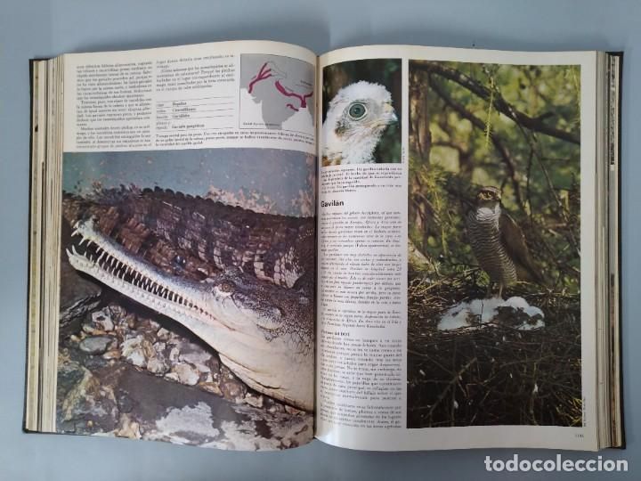 Enciclopedias de segunda mano: ENCICLOPEDIA DE LA VIDA ANIMAL - COMPLETA (6 VOLUMENES) - EDITORIAL BRUGUERA - AÑO 1976 ... L1724 - Foto 15 - 213228926