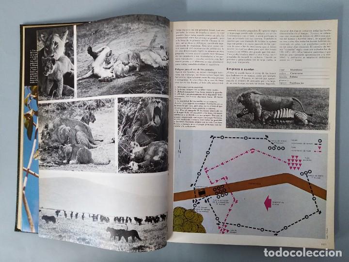 Enciclopedias de segunda mano: ENCICLOPEDIA DE LA VIDA ANIMAL - COMPLETA (6 VOLUMENES) - EDITORIAL BRUGUERA - AÑO 1976 ... L1724 - Foto 19 - 213228926