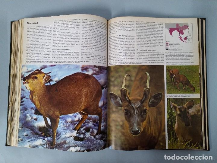 Enciclopedias de segunda mano: ENCICLOPEDIA DE LA VIDA ANIMAL - COMPLETA (6 VOLUMENES) - EDITORIAL BRUGUERA - AÑO 1976 ... L1724 - Foto 20 - 213228926