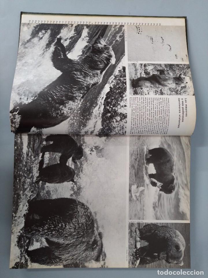 Enciclopedias de segunda mano: ENCICLOPEDIA DE LA VIDA ANIMAL - COMPLETA (6 VOLUMENES) - EDITORIAL BRUGUERA - AÑO 1976 ... L1724 - Foto 24 - 213228926