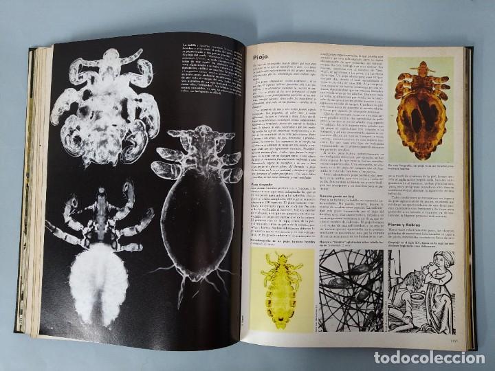 Enciclopedias de segunda mano: ENCICLOPEDIA DE LA VIDA ANIMAL - COMPLETA (6 VOLUMENES) - EDITORIAL BRUGUERA - AÑO 1976 ... L1724 - Foto 25 - 213228926