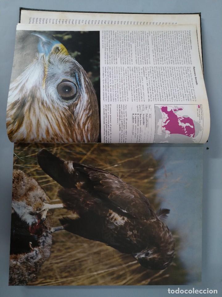 Enciclopedias de segunda mano: ENCICLOPEDIA DE LA VIDA ANIMAL - COMPLETA (6 VOLUMENES) - EDITORIAL BRUGUERA - AÑO 1976 ... L1724 - Foto 29 - 213228926