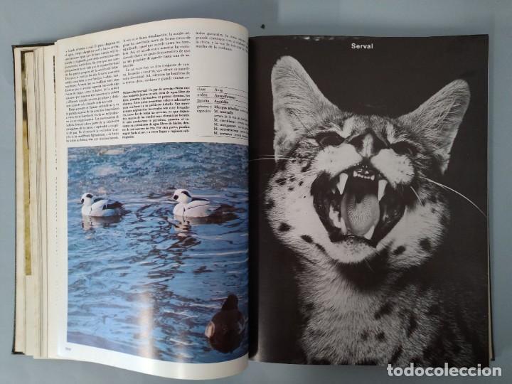 Enciclopedias de segunda mano: ENCICLOPEDIA DE LA VIDA ANIMAL - COMPLETA (6 VOLUMENES) - EDITORIAL BRUGUERA - AÑO 1976 ... L1724 - Foto 30 - 213228926