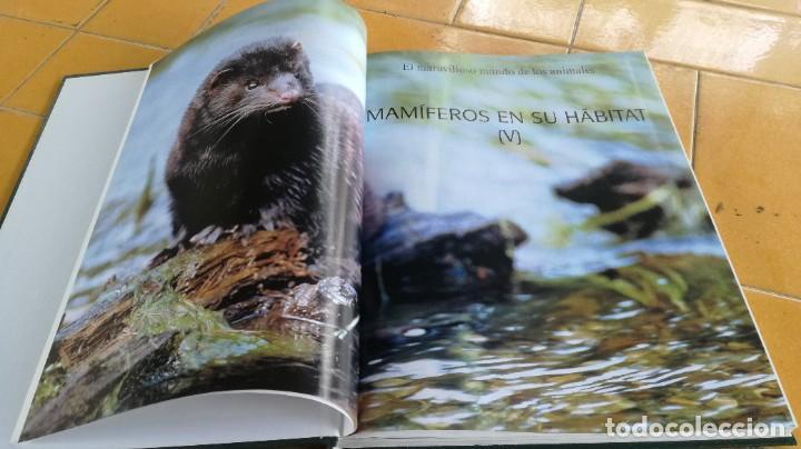 Enciclopedias de segunda mano: EL MARAVILLOSO MUNDO DE LOS ANIMALES - NATIONAL GEOGRAPHIC 17 TOMOS COMPLETA - Foto 24 - 219442651