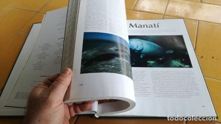 Enciclopedias de segunda mano: EL MARAVILLOSO MUNDO DE LOS ANIMALES - NATIONAL GEOGRAPHIC 17 TOMOS COMPLETA - Foto 28 - 219442651