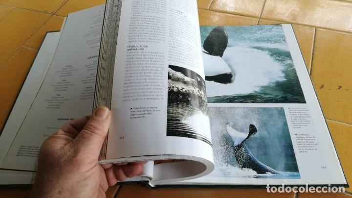 Enciclopedias de segunda mano: EL MARAVILLOSO MUNDO DE LOS ANIMALES - NATIONAL GEOGRAPHIC 17 TOMOS COMPLETA - Foto 30 - 219442651