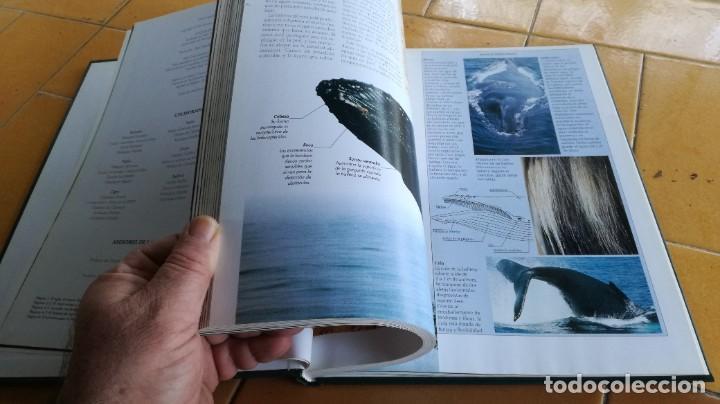 Enciclopedias de segunda mano: EL MARAVILLOSO MUNDO DE LOS ANIMALES - NATIONAL GEOGRAPHIC 17 TOMOS COMPLETA - Foto 32 - 219442651