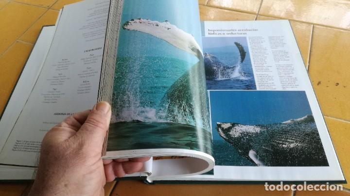 Enciclopedias de segunda mano: EL MARAVILLOSO MUNDO DE LOS ANIMALES - NATIONAL GEOGRAPHIC 17 TOMOS COMPLETA - Foto 33 - 219442651