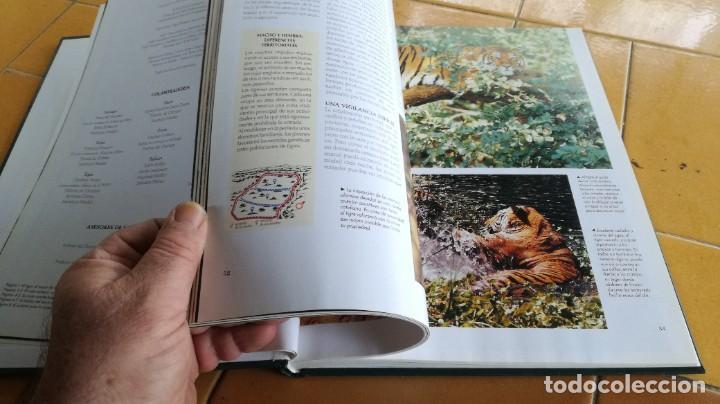Enciclopedias de segunda mano: EL MARAVILLOSO MUNDO DE LOS ANIMALES - NATIONAL GEOGRAPHIC 17 TOMOS COMPLETA - Foto 38 - 219442651