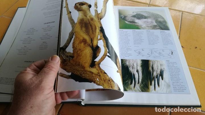 Enciclopedias de segunda mano: EL MARAVILLOSO MUNDO DE LOS ANIMALES - NATIONAL GEOGRAPHIC 17 TOMOS COMPLETA - Foto 41 - 219442651