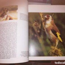 Enciclopedias de segunda mano: FAUNA IBÉRICA Y EUROPEA 10 VOLÚMENES NUMERADA 1992 FÉLIX RODRÍGUEZ DE LA FUENTE ED. SALVAT. Lote 222705613