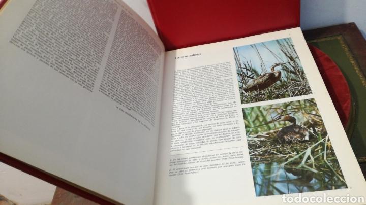 Enciclopedias de segunda mano: enciclopedia de la CAZA - 2 TOMOS - VERGARA - Foto 10 - 288947608