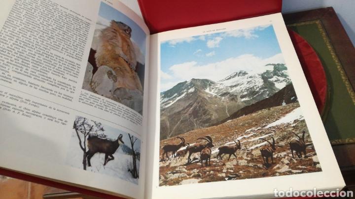 Enciclopedias de segunda mano: enciclopedia de la CAZA - 2 TOMOS - VERGARA - Foto 15 - 288947608
