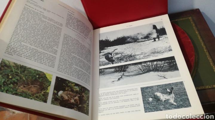 Enciclopedias de segunda mano: enciclopedia de la CAZA - 2 TOMOS - VERGARA - Foto 16 - 288947608