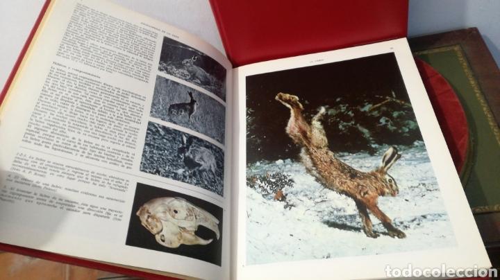 Enciclopedias de segunda mano: enciclopedia de la CAZA - 2 TOMOS - VERGARA - Foto 17 - 288947608