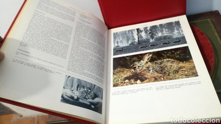 Enciclopedias de segunda mano: enciclopedia de la CAZA - 2 TOMOS - VERGARA - Foto 19 - 288947608