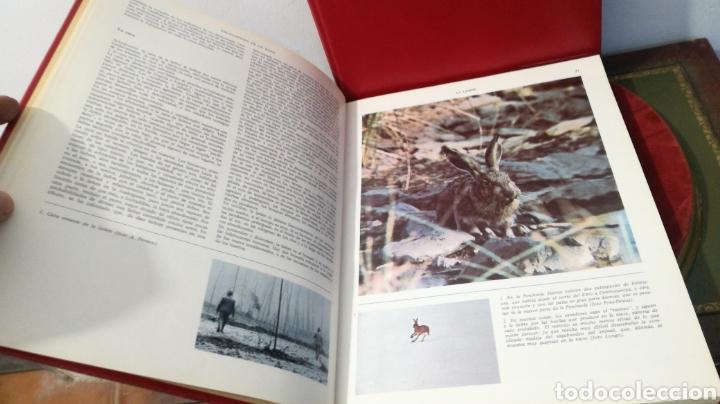 Enciclopedias de segunda mano: enciclopedia de la CAZA - 2 TOMOS - VERGARA - Foto 20 - 288947608