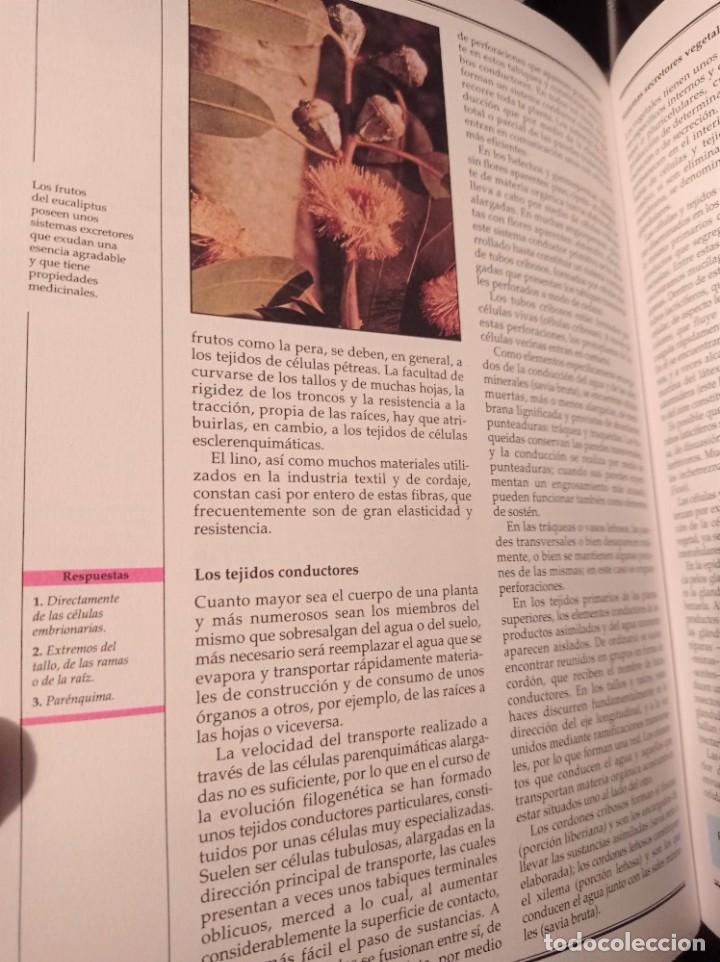 Enciclopedias de segunda mano: Alfa Nauta Programa Educativo Temático. ESO, LOGSE. Ediciones Nauta, 2000. 14 Tomos. - Foto 6 - 289590543