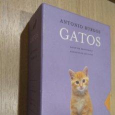 Libros de segunda mano: ESTUCHE DOS TOMOS + DGI ORIGINAL GATOS SIN FRONTERAS Y ALEGATO DE LOS GATOS. ANTONIO BURGOS. Lote 126314931