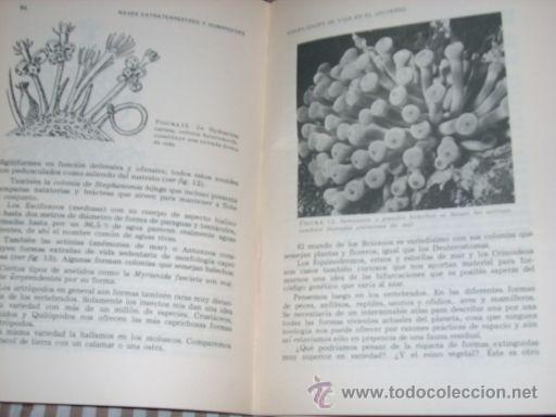 Libros de segunda mano: NAVES EXTRATERRESTRES Y HUMANOIDES, por Ladislao Vadas - IMPRIMA - Argentina - 1978 - Foto 3 - 26247746