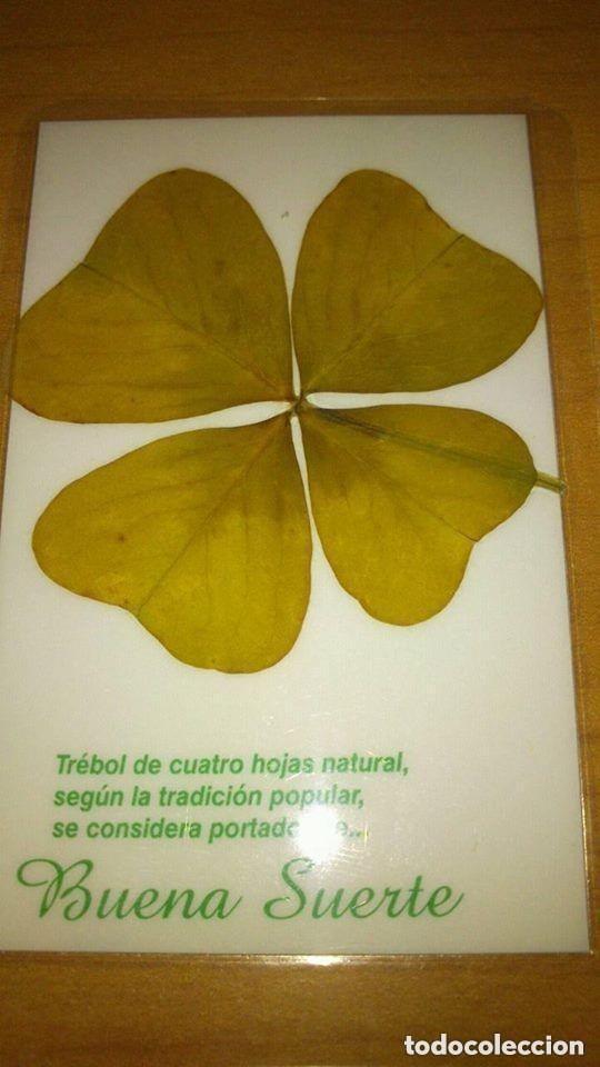Libros de segunda mano: TREBOL DE LA SUERTE DE 4 HOJAS AUTENTICO + INSTRUCCIONES DE USO -- amuleto suerte -- - Foto 5 - 132389862