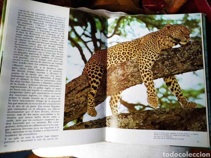 Libros de segunda mano: Felix Rodríguez de la Fuente Animales Salvajes 1985 - Foto 3 - 164601362