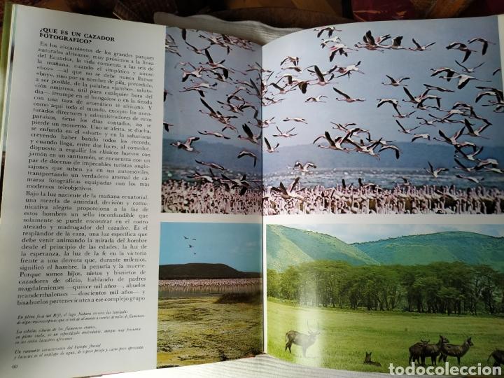 Libros de segunda mano: Felix Rodríguez de la Fuente Animales Salvajes 1985 - Foto 6 - 164601362