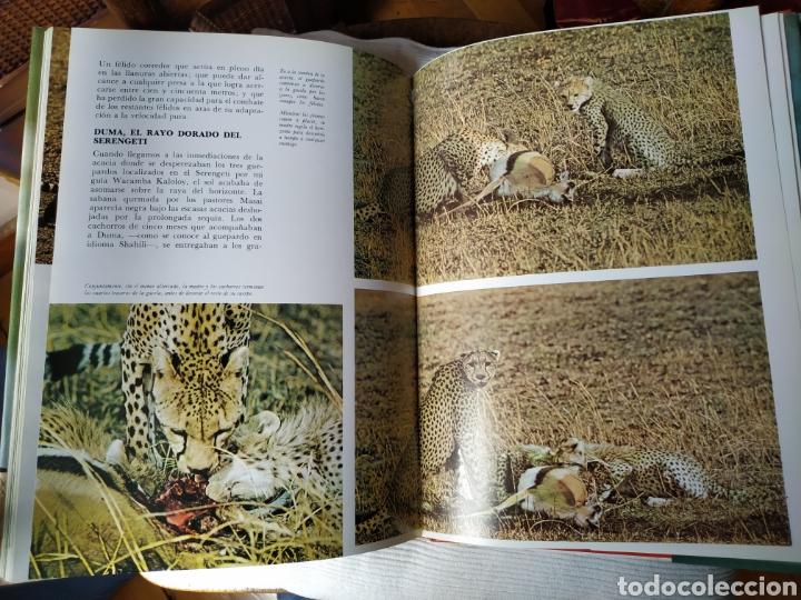Libros de segunda mano: Felix Rodríguez de la Fuente Animales Salvajes 1985 - Foto 7 - 164601362
