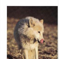 Libros de segunda mano: THE ARCTIC WOLF. EL LOBO ÁRTICO. NATURALEZA. ÁRTICO.. Lote 204469677