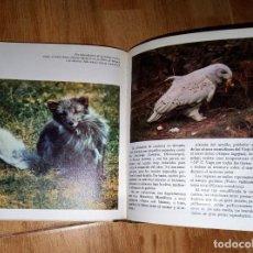 Libros de segunda mano: EL MUNDO ANIMAL ( SALVAT ). Lote 209809927