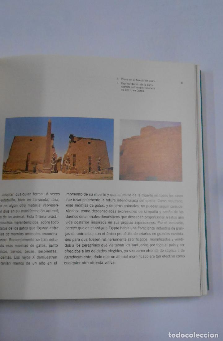 Libros de segunda mano: EGIPTO MILENARIO. VIDA COTIDIANA EN LA EPOCA DE LOS FARAONES. - CATALOGO. TDK324 - Foto 2 - 112320383