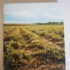 Libros de segunda mano: GUIA VINICOLA DE ESPAÑA, LUIS ANTONIO DE VEGA, NACIONAL 1970, LIBRO ANTIGUO DESCATALOGADO. Lote 132344782