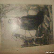 Libros de segunda mano: ANA DE SAGRERA, LA DUQUESA DE MADRID, ÚLTIMA REINA DE LOS CARLISTAS. 1969. 586 PÁGINAS. 49 FOTOS.. Lote 155500298