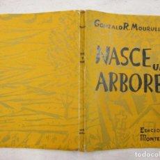 Libros de segunda mano: GALICIA - NASCE UN ARBORE - GONZALO R. MOURULLO - EDI MONTERREY 1954 VIGO + INFO Y FOTOS, ILUSTRADO.. Lote 65868942
