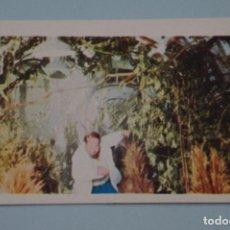 Libros de segunda mano: CROMO DE FLASH GORDON SIN PEGAR Nº 21 AÑO 1980 DEL ALBUM FLASH GORDON DE E.G.C.S.A.. Lote 208449688