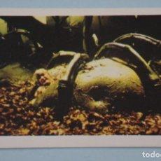 Libros de segunda mano: CROMO DE FLASH GORDON SIN PEGAR Nº 134 AÑO 1980 DEL ALBUM FLASH GORDON DE E.G.C.S.A.. Lote 147304766