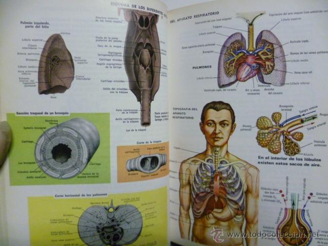 Libros de segunda mano: MEDICINA PARA TODOS, Dr. J. BIERGE - SOPENA 1980 (ver fotos) - Foto 5 - 40709197