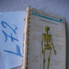 Libros de segunda mano: ANTIGUO LIBRO - ATLAS DE ANATOMIA HUMANA. Lote 49844859