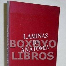 Libros de segunda mano: LÁMINAS DE ANATOMÍA. APARATO RESPIRATORIO. Lote 50127012