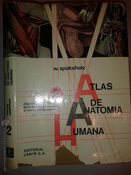 atlas de anatomía humana 2 regiones, músculos, - Comprar Libros de ...