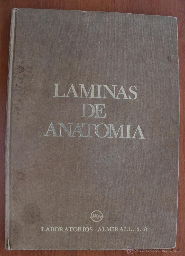 libro medicina : laminas de anatomía – dibujos - Comprar Libros de ...