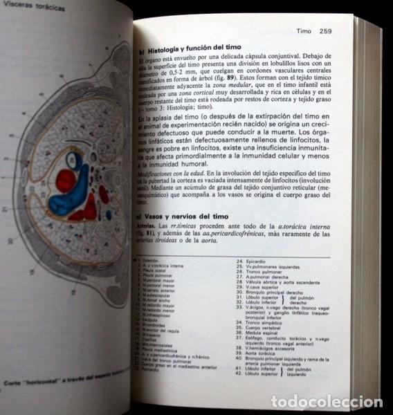Libros de segunda mano: MANUAL DE ANATOMIA HUMANA - 2 tomos - FRICK , H. / LEONHARDT , H. / STARCK , D. .- OMEGA - Foto 2 - 67171893