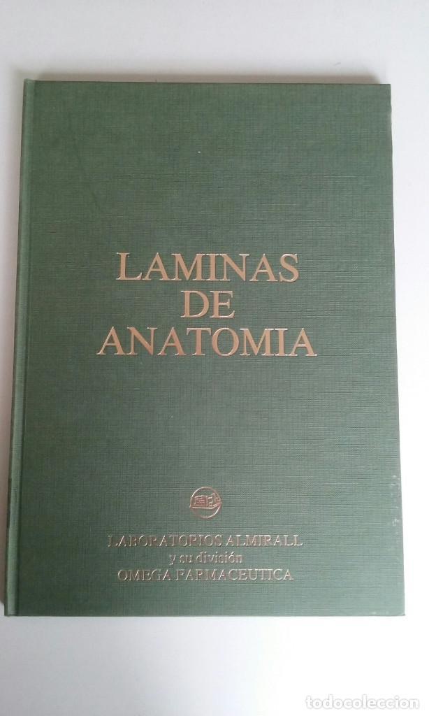 laminas de anatomia - cabeza, torax, abdomen y - Comprar Libros de ...