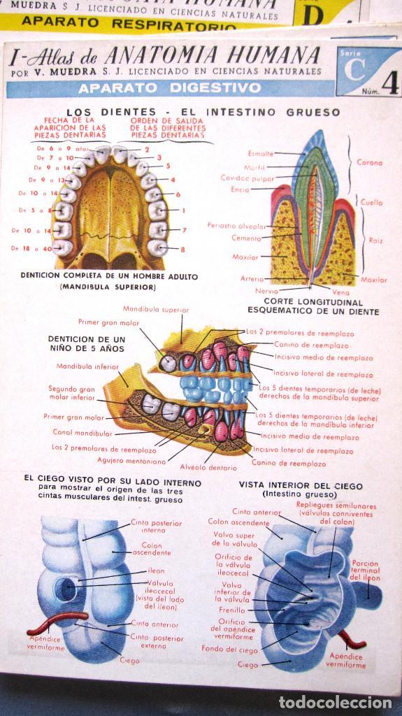 muy antiguo atlas de anatomia humana en laminas - Comprar Libros de ...
