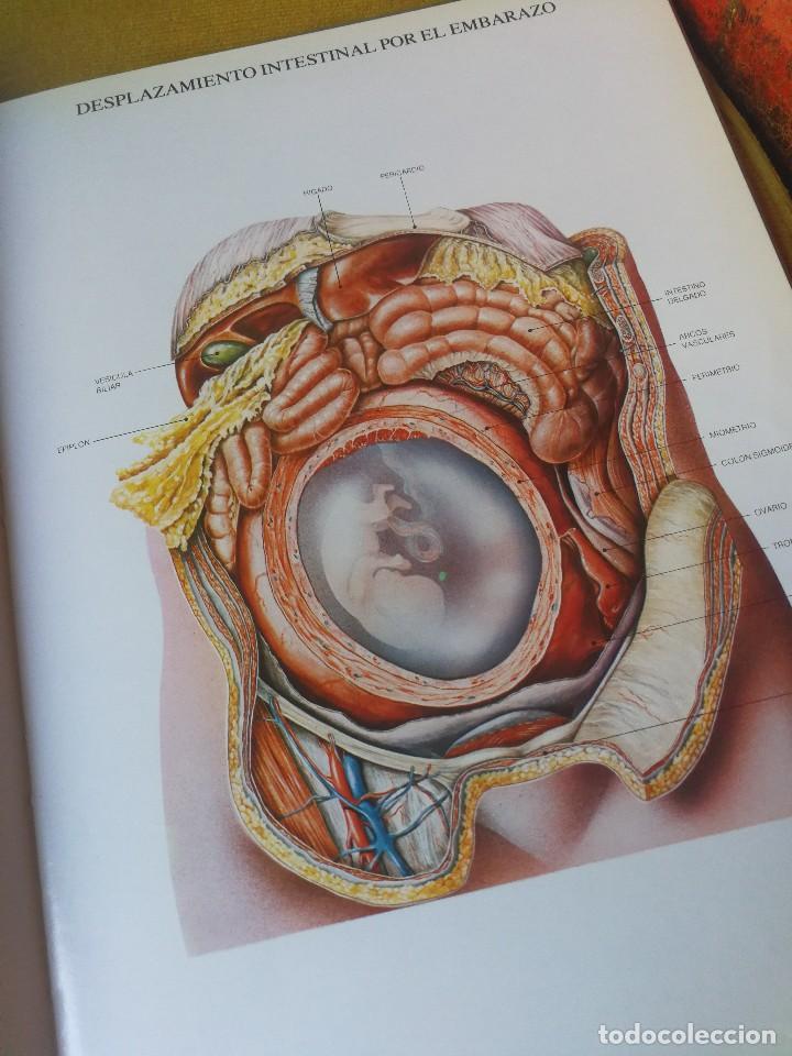 libro laminas de anatomia , laboratorios almira - Comprar Libros de ...