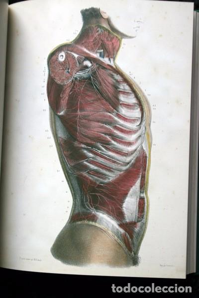 tratado la anatomia del hombre - snc y organo - Comprar Libros de ...